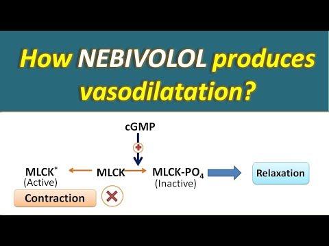 How Nebivolol Produces Vasodilatation?