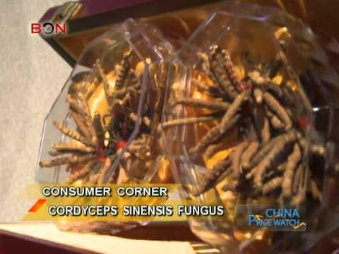 Cordyceps Sinensis Fungus - Price Watch July 11 - BONTV
