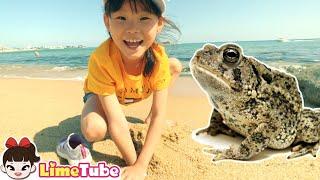 두껍아 두껍아~라임가족 속초 1박2일 여행 LimeTube review