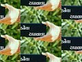 Murlidhar no pavar || whatsapp status video Whatsapp Status Video Download Free