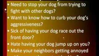 Dog Training Tips | Dog Obedience Training