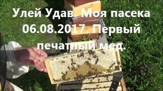 Пчеловодство в улье Удав. Моя пасека 6 августа 2017. Первый печатный мед. Beekeeping