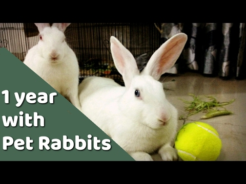 Having pet Rabbit- India review