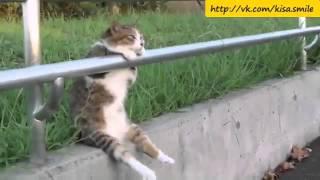 Серьезные мысли о жизни ==Kisa Smile== Прикольные фото и видео с кошками