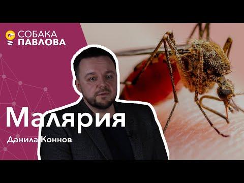 Малярия - Данила Коннов//малярийный плазмодий, тропическая малярия, гамонт, спорозоит