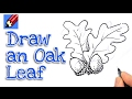 Learn how to draw acorns and oak leaves  Real Easy for kids and beginners