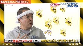 熊本スズメバチ駆除取材 有限会社日東防疫 熊本朝日放送 くまパワ フルバージョン