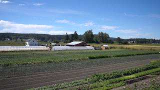 Red Dog - Farm To Table Dining Experience - The Resort At Port Ludlow