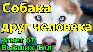 Собака - друг человека. Ответ от Высших Сил.