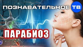 ПАРАБИОЗ: красота, здоровье, работоспособность (Познавательное ТВ, Олег Мульцин)