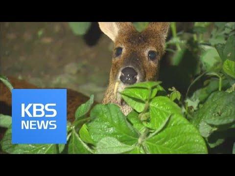 Crops & Wild Animals / KBS뉴스(News)