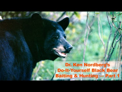 Do-It-Yourself Black Bear Baiting And Hunting — Part 1