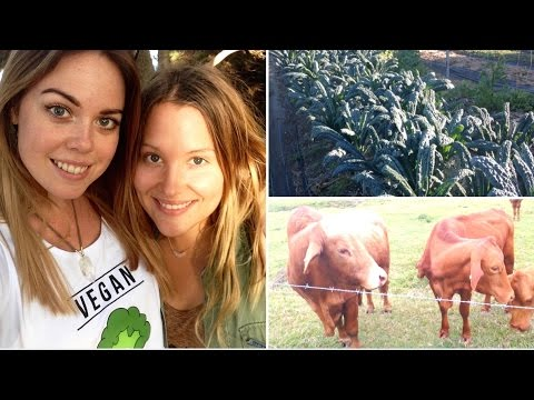 ORGANIC FARM, PARTY & CAMPING | vegan style - Raw Nourishment
