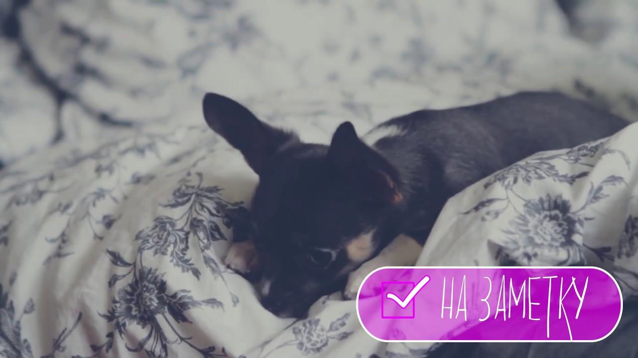 Как вывести глистов у щенков в домашних условиях
