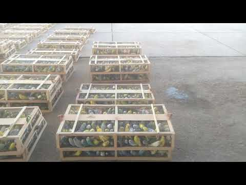 Export of Birds huge revenue generated business Shipment export from Karachi to Istanbul