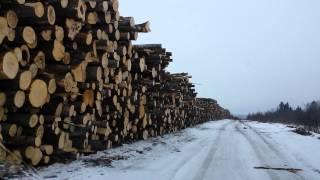 Зверская вырубка леса во Владимирской обл.