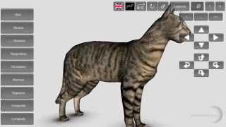 3D Cat Anatomy App