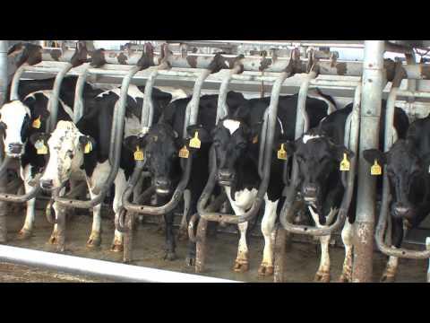 Wilkinson Elementary  Dakin Dairy Field Trip