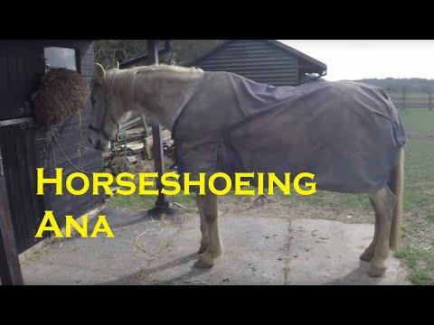 Horse Shoeing Ana