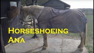 Horseshoeing Ana