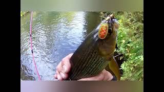 ХАРИУС НА ТАЕЖНОЙ РЕКЕ В Сентябре Осень 2021 Рыбалка 2021