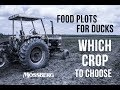 What to Plant for Ducks - What plants attract ducks? How to Plant Them?