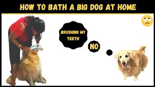 Golden retriever bathing video | How to bathe a big dog at home | House Wife Story