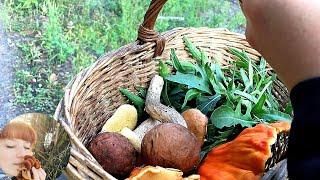 НЕОБЫЧНЫЕ ГРИБЫ В СЕНТЯБРЕ: Продолжение. Как готовить грибы маслята