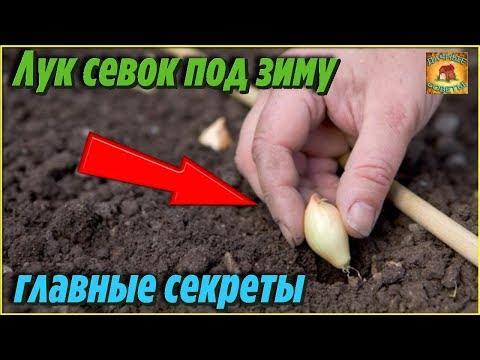 Лук севок ПОД ЗИМУ Самые ВАЖНЫЕ секреты осенней посадки ЛУКА Простой и надежный способ выращивания