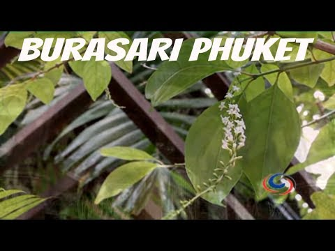 Luxury Escapes - Burasari Patong Boutique Hotel Phuket