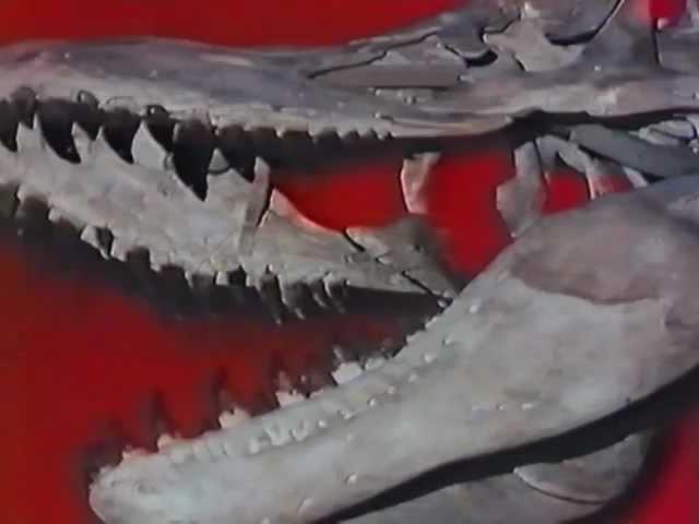 [7/7] ~ La era de los dinosaurios (Daikyouryu no jidai), 1979, VHSrip, español ibérico