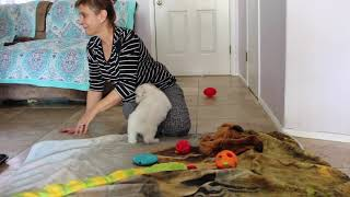 Coton Puppies For Sale - Kara 6/1/21