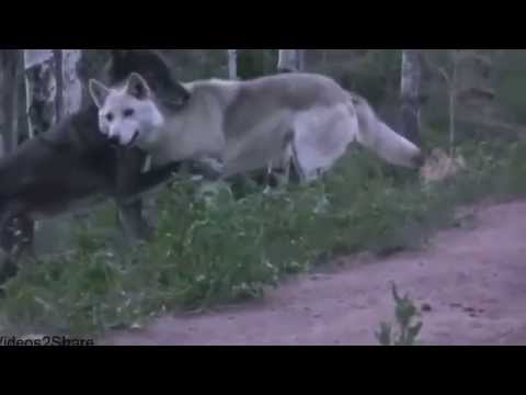 Hot Animal Mating Crazy Videos 2014
