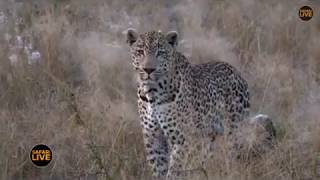 Pt 1 Safari Live's Sunrise Safari Drive at 6:30 AM on May 05, 2018 ( Tingana )