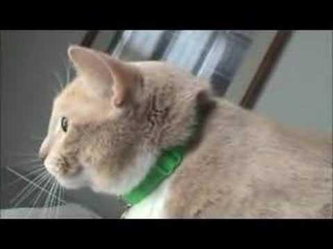 Cat Make Weird Chirping Noise