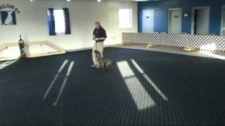 16 1/2 Week Old Knox Working Obedience At Homeland K-9, Mike Loesche, Dogs That Obey , Remote Collar