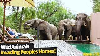 Top 10 Incredible encounters of wild animals invading people's homes.