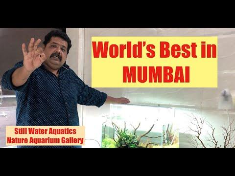 #India's #Best #Aquarium Gallery #Mumbai #Planted Aquarium #Fish Aquarium #Terrarium #Home Aquarium