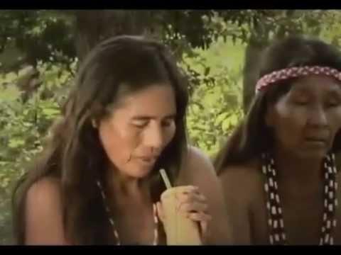 History and benefits of yerba mate (Pajarito-Lauro Raatz, Paraguay)