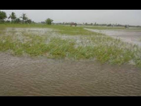 Inilah !!! 10 Arti Mimpi Lihat Banjir Di Sawah Menurut Primbon J