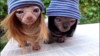 смешное видео с животными приколы с животными смешные животные приколы про животных