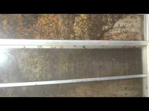 bee-removal-|-west-palm-beach-|-palm-beach-|-broward-county