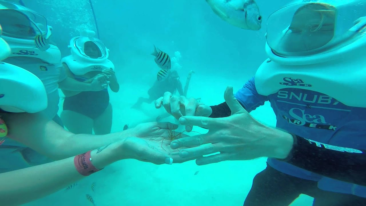 Sea Trek Grand Cayman 2015 Youtube
