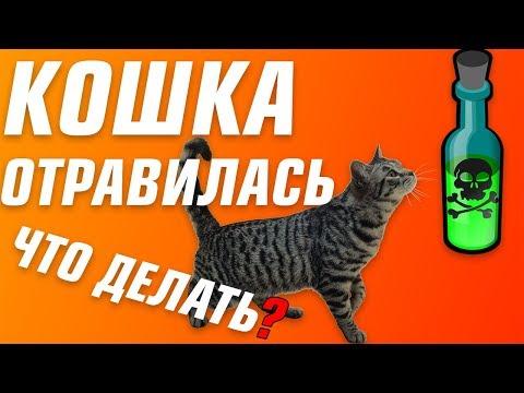 Как лечить кота от отравления в домашних условиях