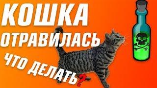 Что делать если кошка отравилась? | Отравление у кошек