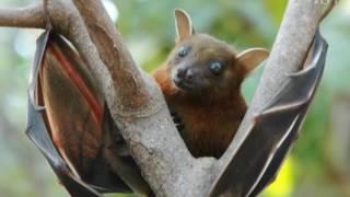 Летучие мыши: уникальные животные, удивляющие распорядком жизни