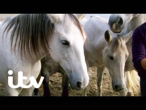 The Amazing Horse Whisperer Jean François Pignon | Martin Clunes: My Travels and Other Animals | ITV