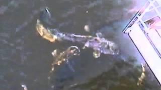 Мутанты в Чернобыле. Припять. Вся правда. Смотрите(Съемка с боевого вертолета, через тепловую камеру.Чернобыль. г. Припять. Мутация. Все видео на канале http://www.yo..., 2014-10-07T07:30:02.000Z)
