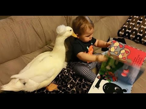 Loving Duck Won't Let ANYTHING Hurt His Favorite Little Boy