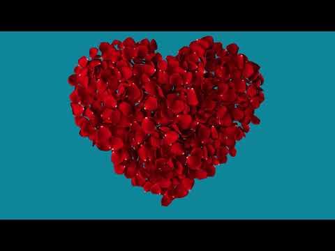 футаж сердце из лепестков роз на хромакее №2